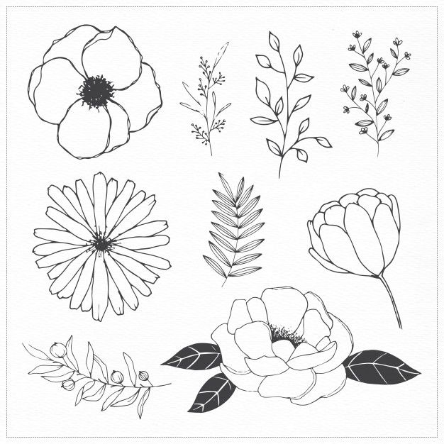Download Hand Drawn Flowers And Leaves For Free Hand Drawn Flowers Flower Drawing Floral Drawing