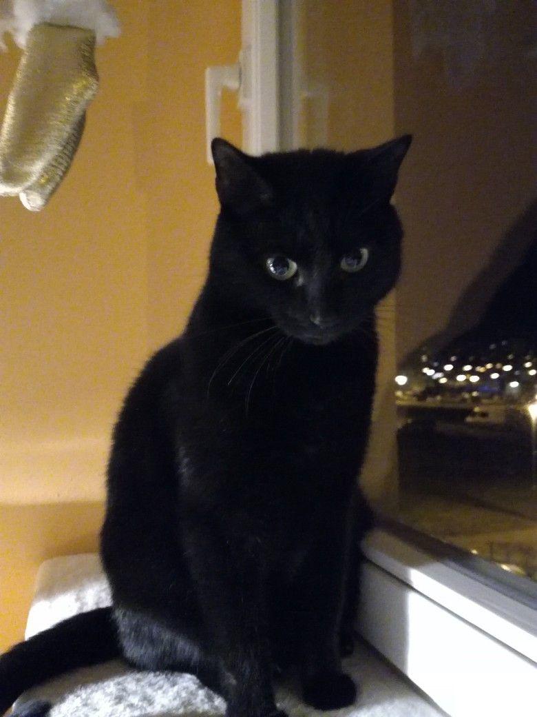 Certik Cerny Kocourek Black Cat Cute Cats Dogs Cats Kittens