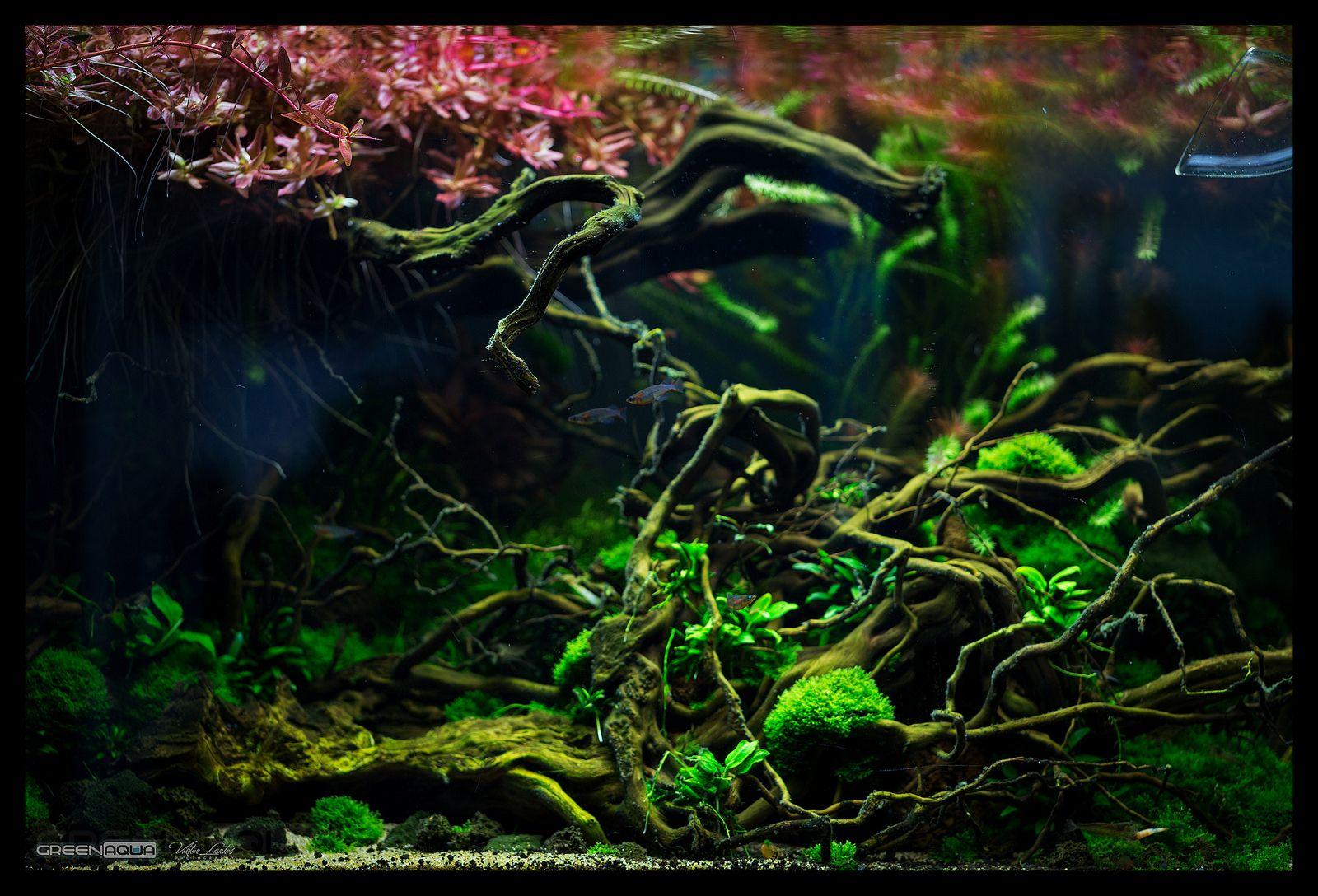 Green Aqua Showroom   Aquascape, Fresh water, Nature aquarium