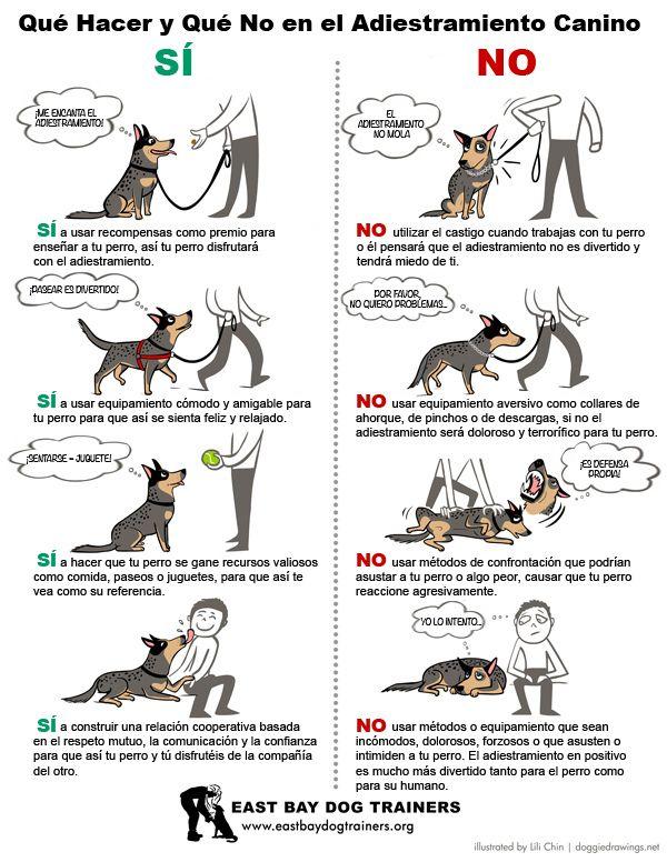 Tipos De Collares De Castigo Para Perros Estas Intentando Adiestrar A Tu Perro Toma Nota A Estos