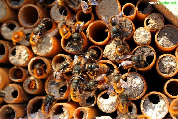Insektenhotel richtig bauen - nicht nur Deko, sondern Hilfe für Nützlinge