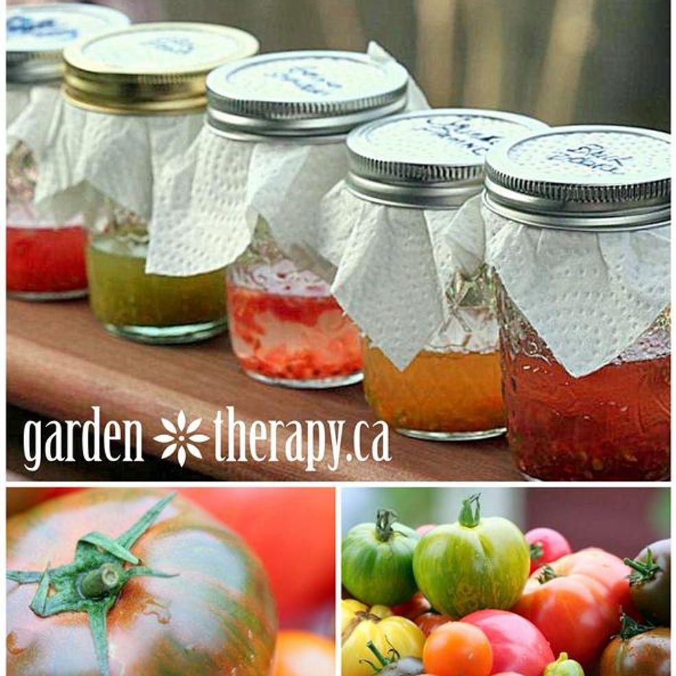 How to save heirloom tomato seeds tomato seeds heirloom