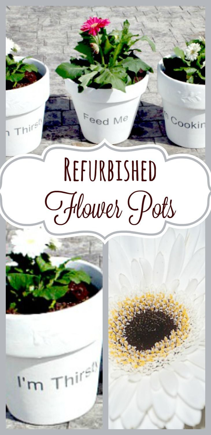 Refurbished Flower Pots With Cute Plant Care Hints Flower Pots