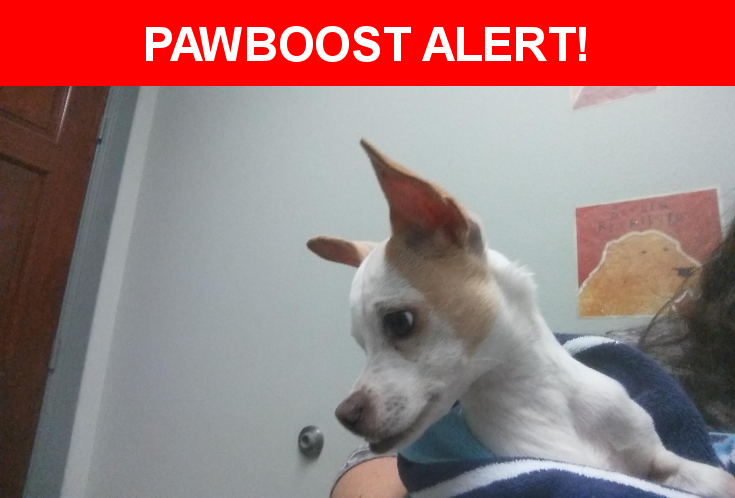 Is this your lost pet? Found in Spring, TX 77381. Please spread the word so we can find the owner!