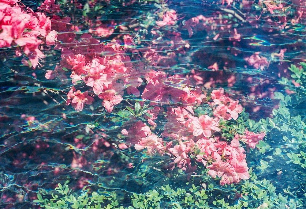 Vaporwave Underwater Azalea Flower Garden By Haydenwilliams Azalea Flower Underwater Flowers Flower Aesthetic