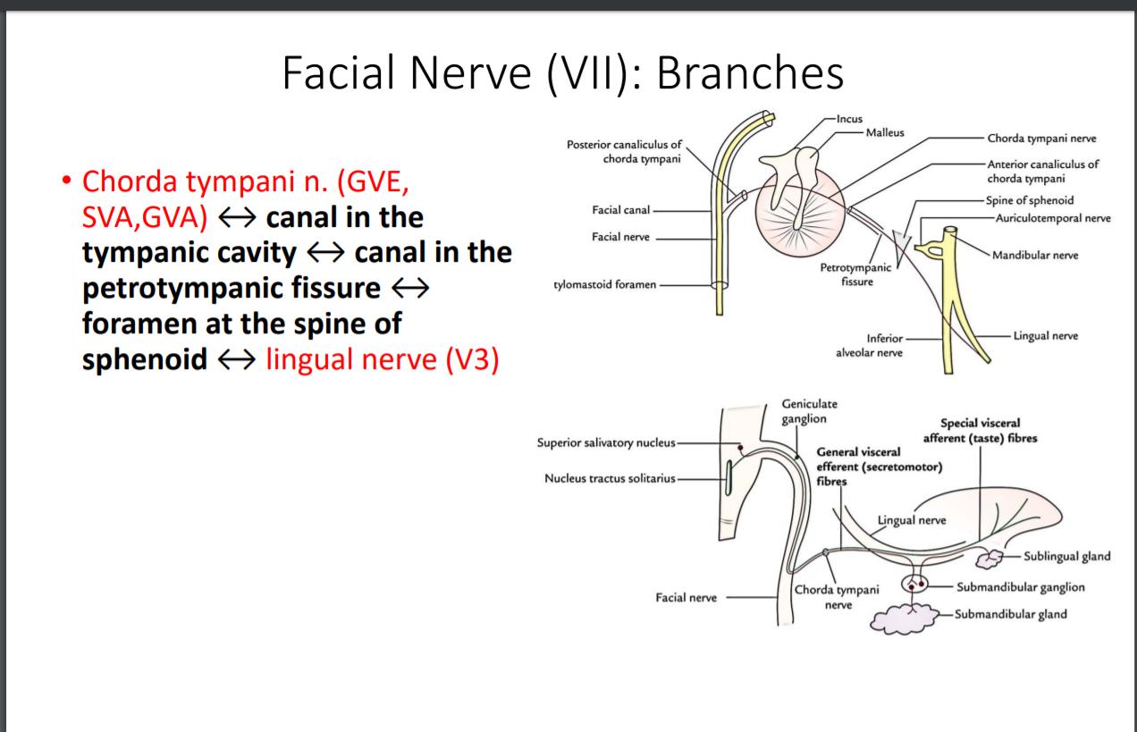 Definition Of Visceral Cranium - defitioni
