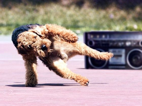 who doesn't love a break dancing dog?