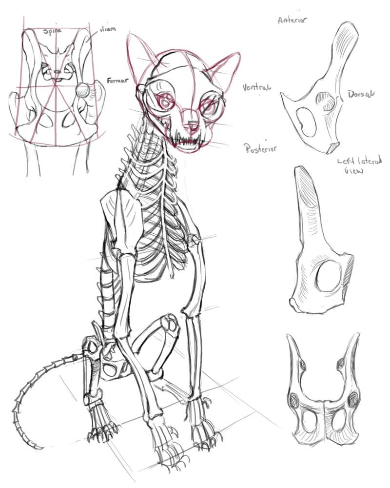 Pin by Lin Lin on 獸類 | Pinterest | Cat anatomy, Animal anatomy and ...