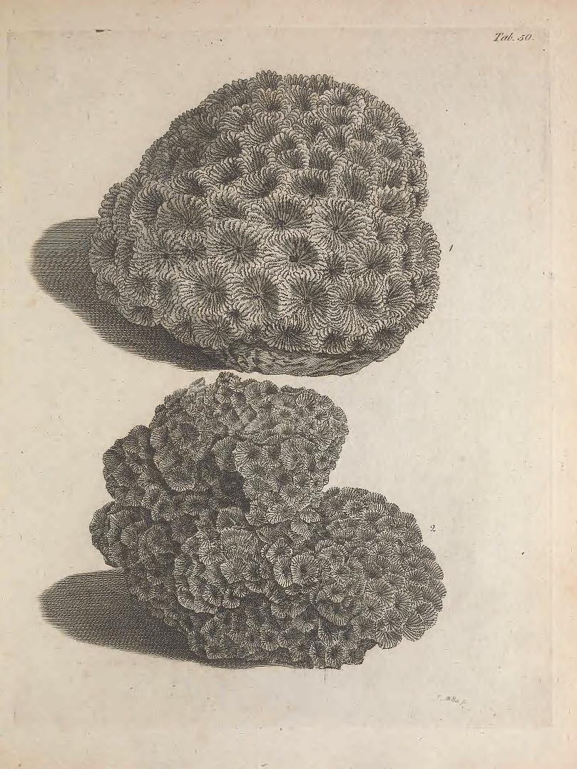 The natural history of many curious and uncommon zoophytes : - Biodiversity Heritage Library
