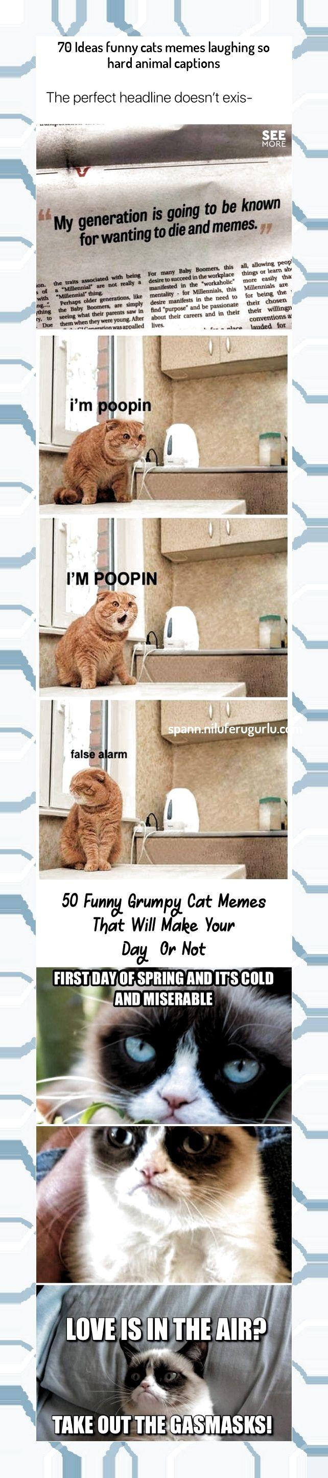 Cake aesthetic Comics and cartoons grumpy cat memes laughing so hard, funny memes hilarious