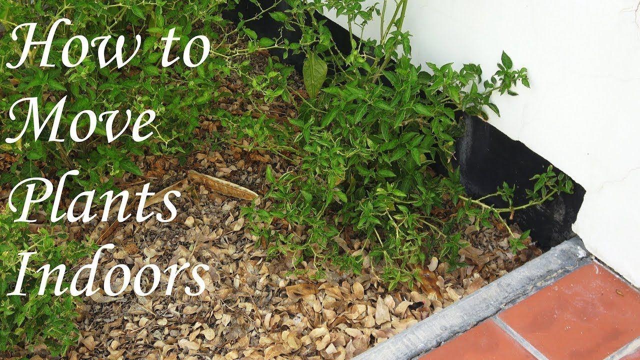 نقل نباتات ما طريقة صحيحة ومواعيد والاحتياطات واجبة حلقة 203 Indoor Plants Plants Indoor