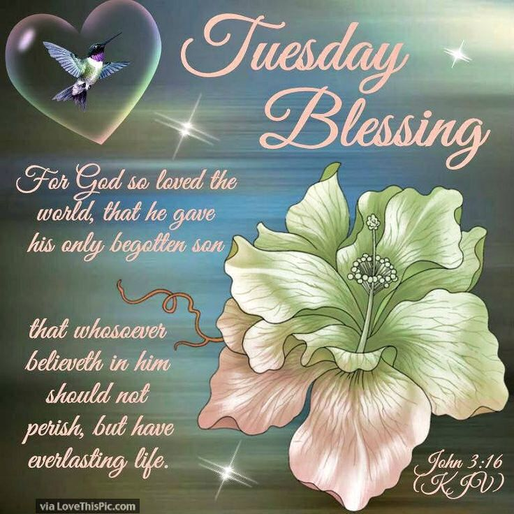 Tuesday Blessing With Images Happy Tuesday Morning Tuesday