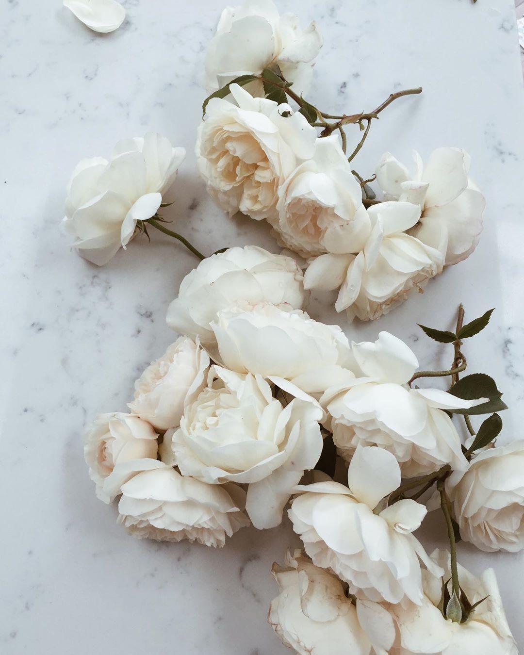 "Amanda Woodward-Brown on Instagram: ""English summer.  #FromTheGarden #Roses #Beauty #SummerInEngland #FlowerAddict #FreshlyPicked #Flora"""