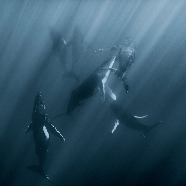 Intimate, Close-Up Portraits of Whales by Darren Jew - My Modern Metropolis
