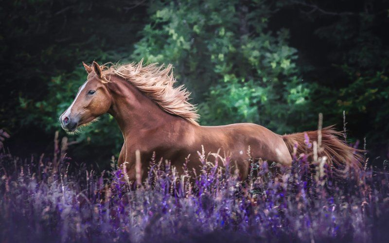 Desktop Wallpaper Horse Run Meadow Animals Hd Image Picture Background 62a1ae Horse Wallpaper Horses Animals