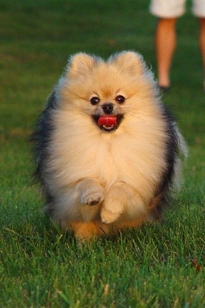 Party Pom I Have The Ball And You