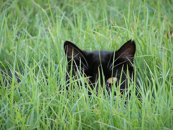 they'll never see me here... (this is soooo like my best friend's cat Inky! he thinks he's invisible during the day!)