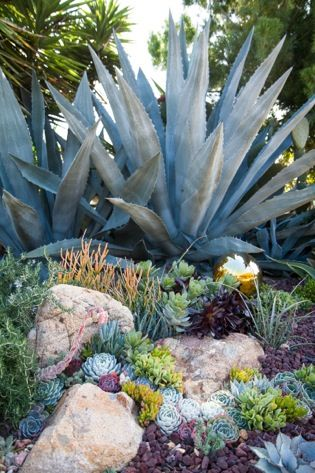 Create a Succulent Pocket Garden is part of Succulent Rock garden - Every gardener knows that succulents are not only trendy, but also low maintenance and water wise  They adapt beautifully to our Mediterranean climate and will flourish in just about any soil  As a designer, I am always on the lookout for new and exciting ways to feature succulents in my clients' gardens and landscapes  I recently discovered an innovative way