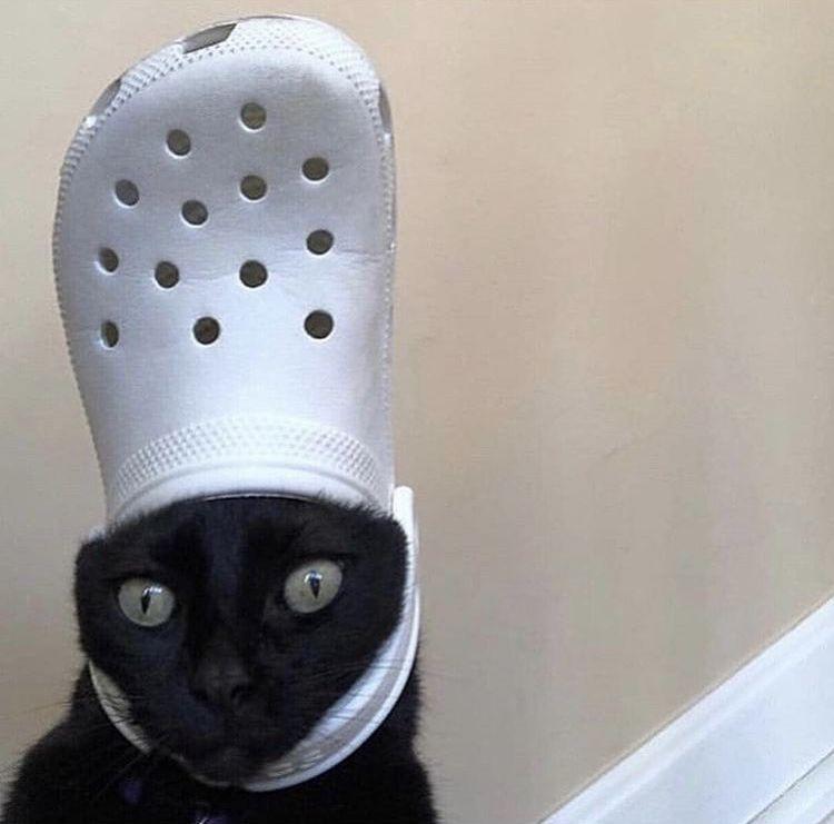 Photo of crocs cat😎 – C – #cat #crocs