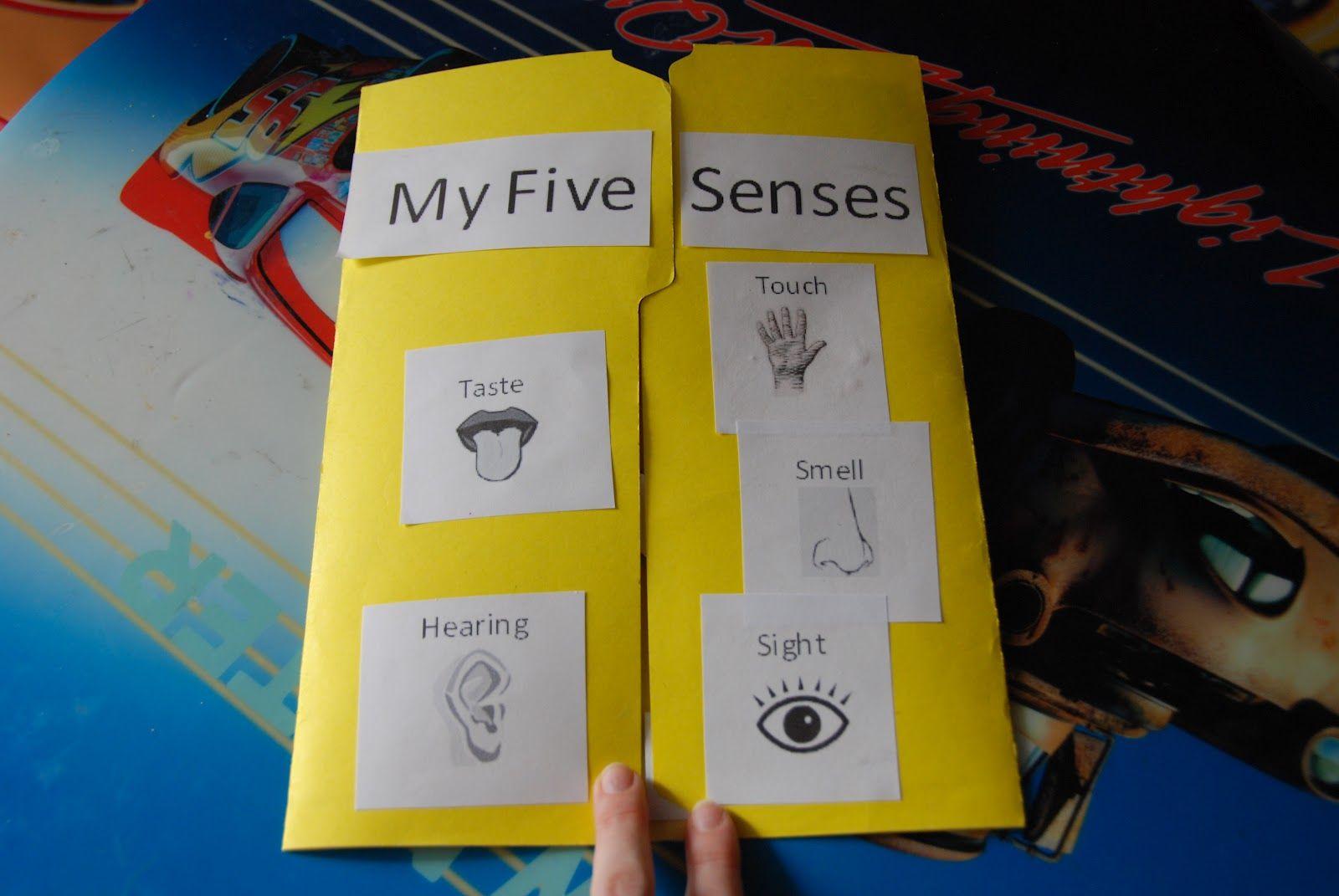 Keptalalat A Kovetkez Re My Five Senses Lapbook