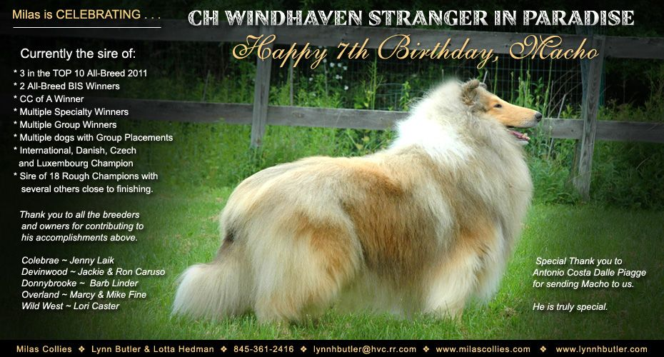 Ch Windhaven Stranger In Paradise Windhaven Multiple Dogs Stranger