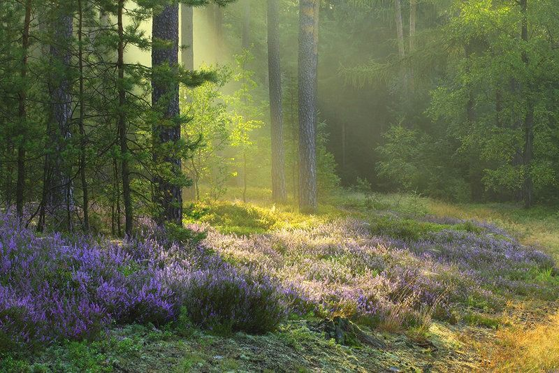 Enchanted Fairytale Dreams ♔ Beautiful nature, Landscape