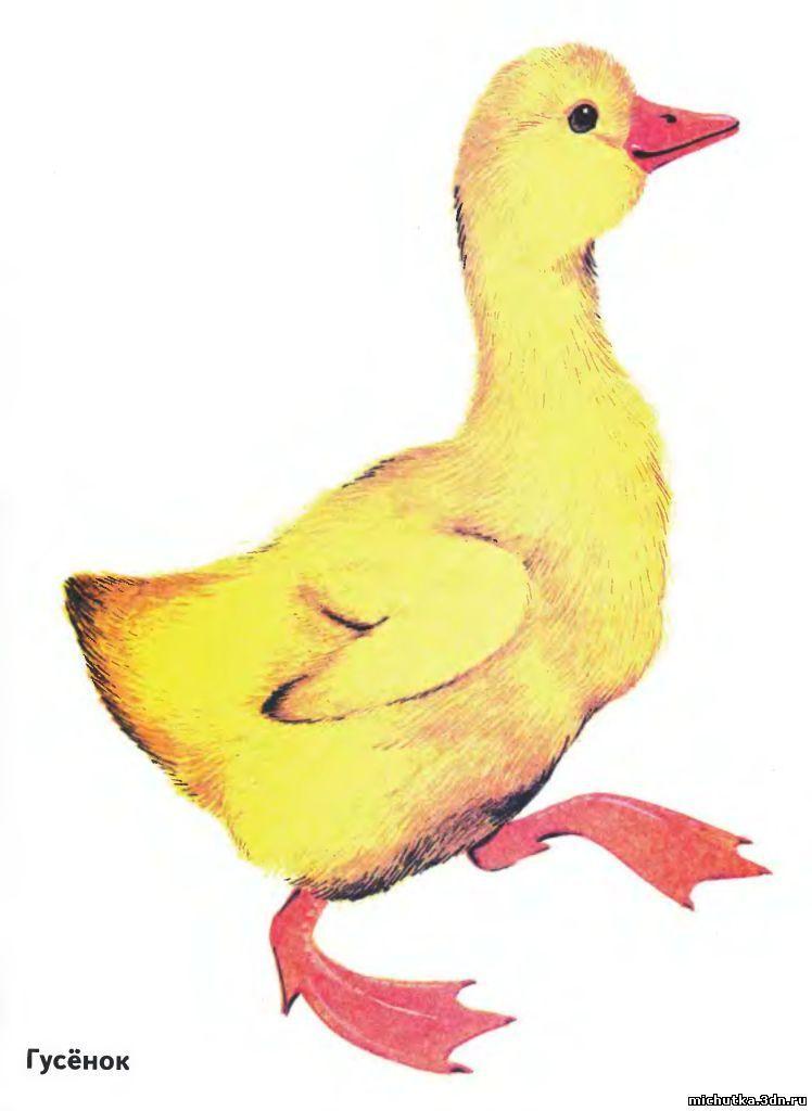 Картинки для детей гусята