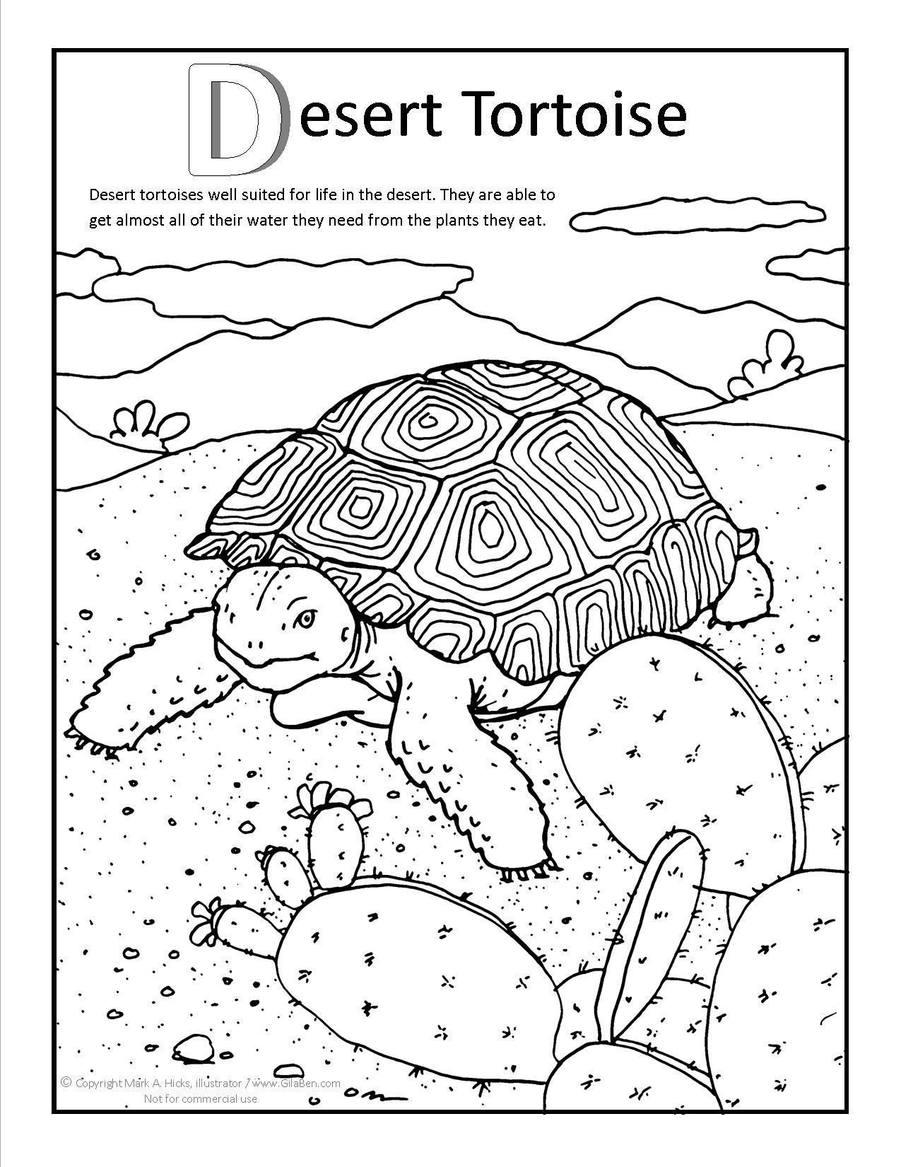 Desert Tortoise Coloring Page At Gilaben Com Desert Animals