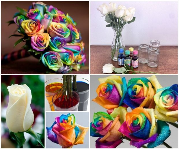 Wonderful Diy Beautiful Rainbow Roses With Images Paper Roses