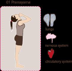 Tiefenatmung   Stärkt: Schultern, Deltoids   Dehnt: Brustkorb, Schultergelenke, Zwischenrippenmuskeln   Stimuliert: Lungen, Kreislauf   Nutzen: Die Tiefenatmung erhöht die Lungen-kapazität