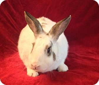 Hooray for Daffodi!!  #bunnies #rabbits #animalrescue