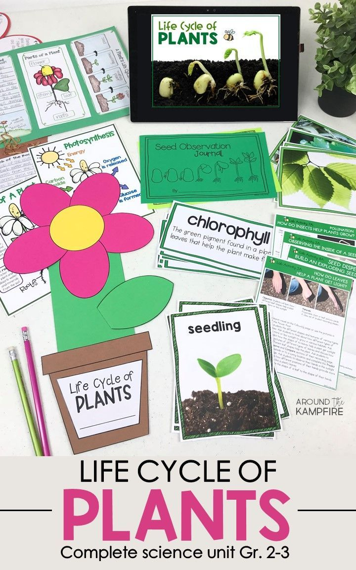 Life Cycle Of Plants Science Unit Plant Life Cycle Planting For Kids Preschool Science [ 1152 x 720 Pixel ]
