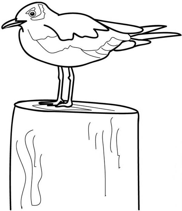 Seagull On A Block Coloring Page Kids Play Color Coloring Pages Coloring For Kids Color