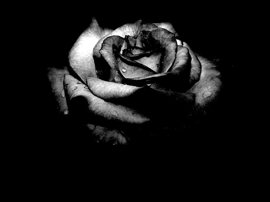 Amazing Black Rose Blood Art