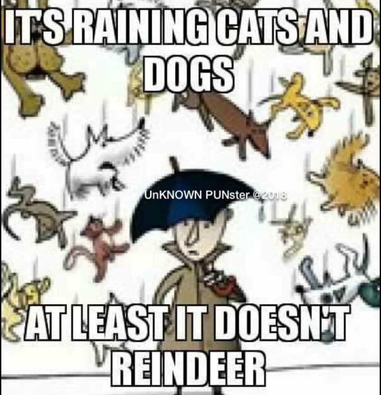 Raining Cats And Dogs Meaning Raining Very Heavily Raining
