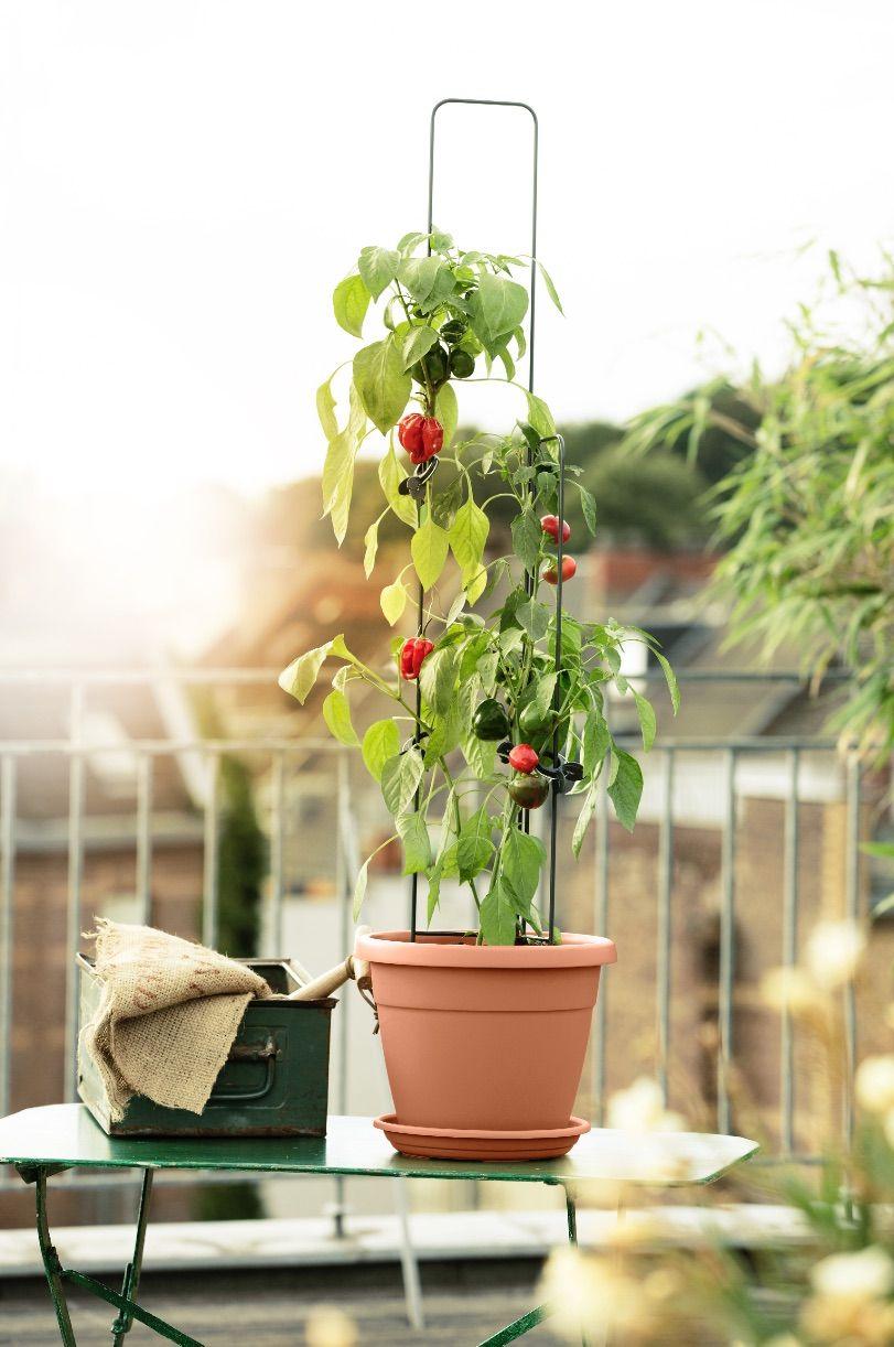 Cleveres Ranksystem Fur Tomaten Paprika Co Emsagmbh Emsa Emsaliebe Stadtbalkon Urbangardening Kitchengardening M Stadtgarten Garten Gestalten Garten