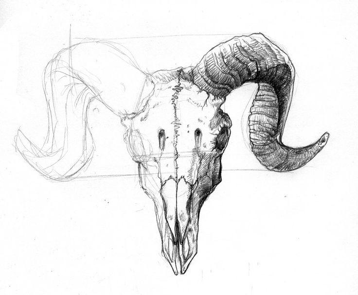 ram skull illustration tattoo back - Google Search
