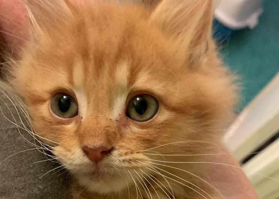 Kitten Insists On Being Cuddled After He Was Rescued From Rough Life On Streets Kitten Cuddle Kittens Cat Breath