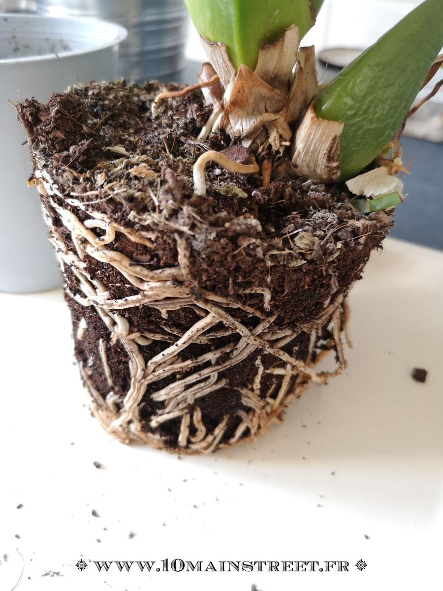 Comment Planter Une Orchidée Épinglé sur fleuris