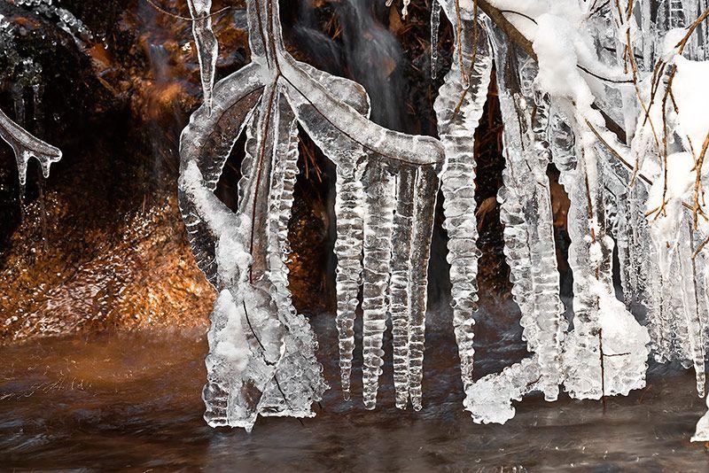 Una enorme cantidad de hielo es soportada por unas finísimas ramas en un torrente de La Pedriza tras varios días a muchos grados bajo cero, mientras un rayo de Sol caldea la temperatura