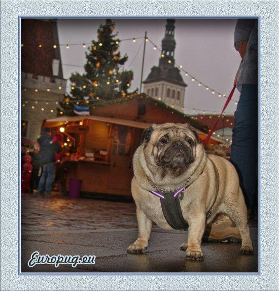 After three days are Christmas - http://europug.eu/after-three-days-are-christmas/