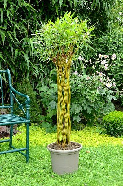 osier vivant arbre tress loisirs cratifs 3 living willow willow weaving garden - Osier Vivant Jardiland