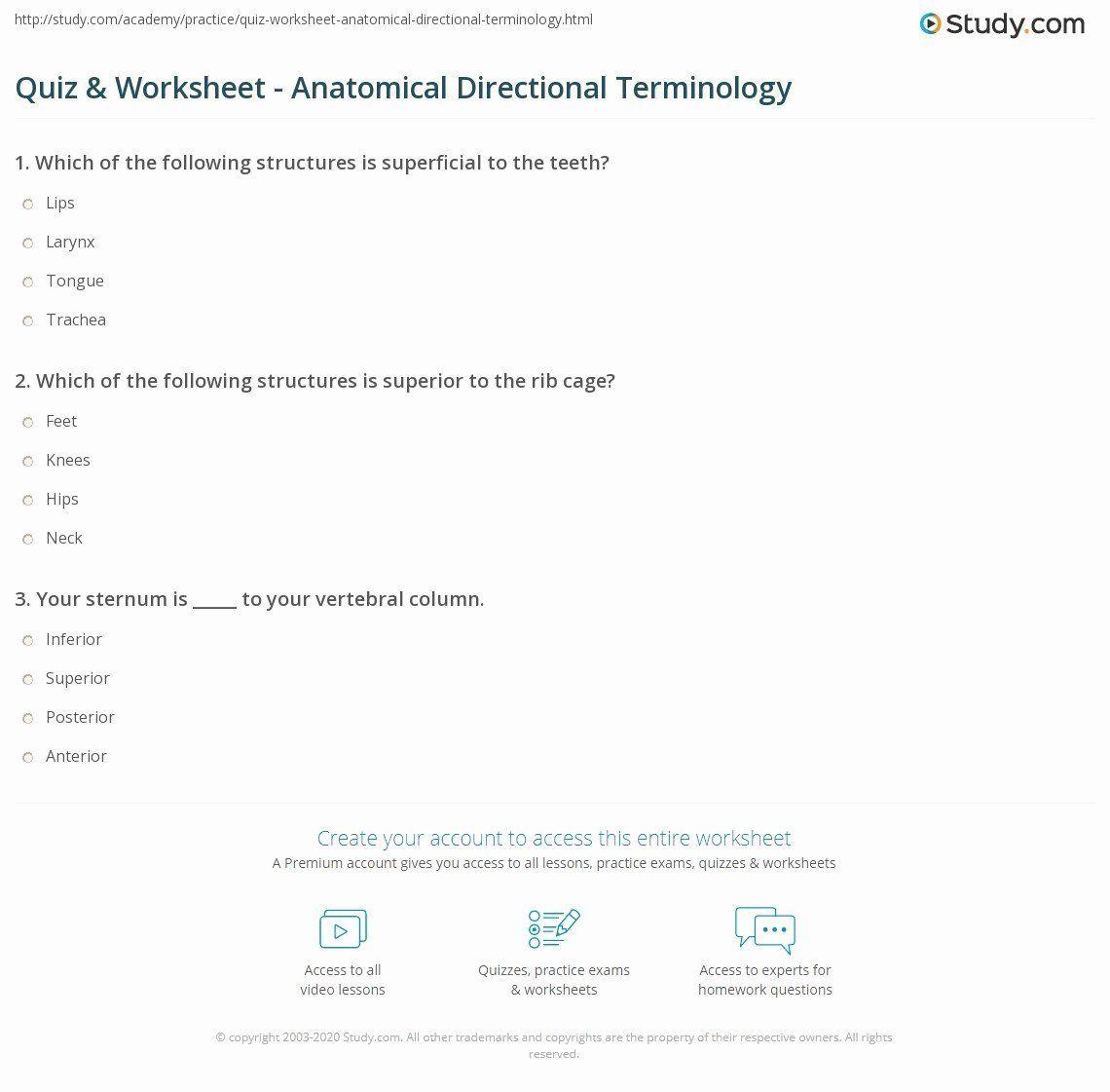 Anatomical Terms Worksheet Answers Elegant Quiz