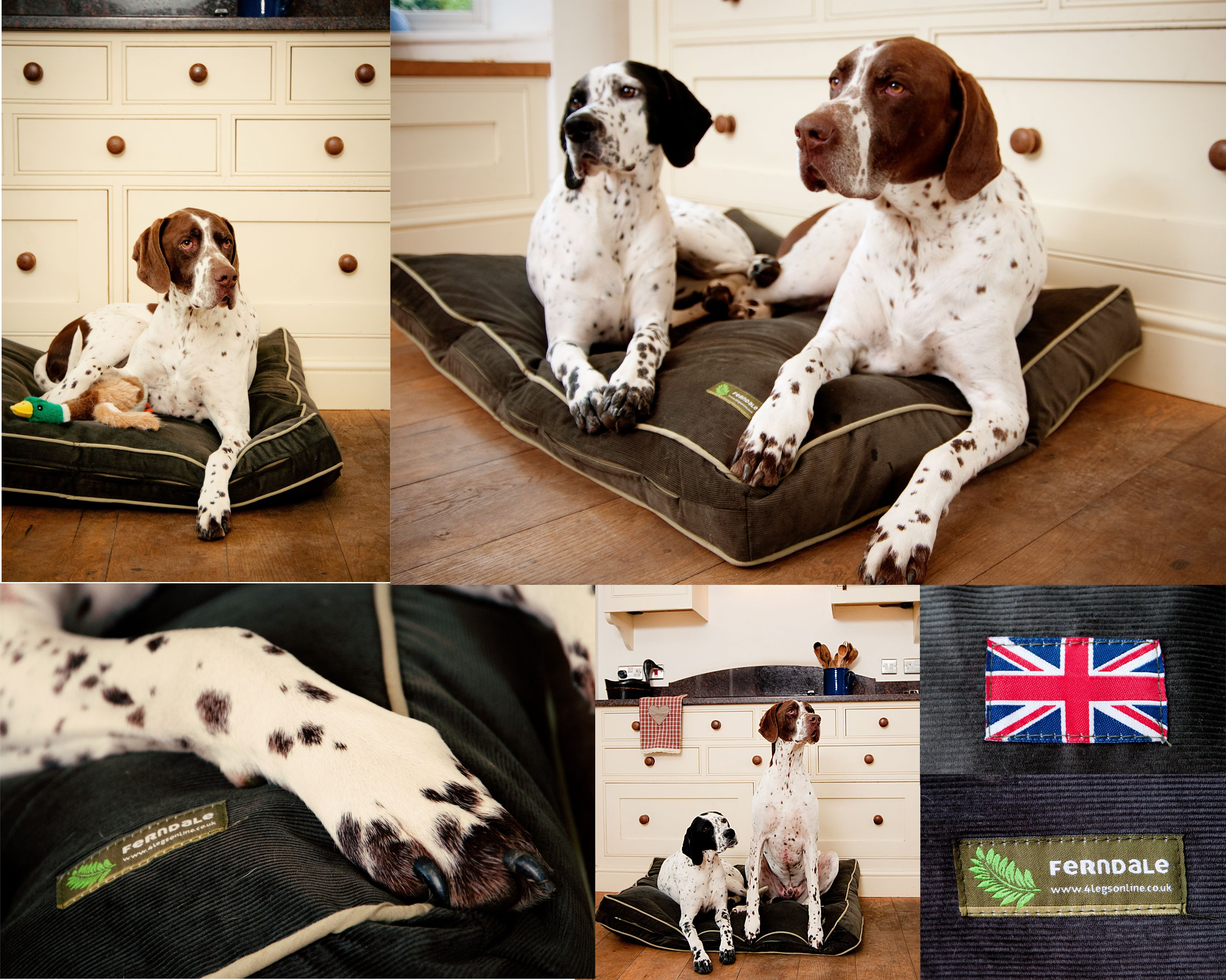 Ferndale Luxury Dog Bed from (With images