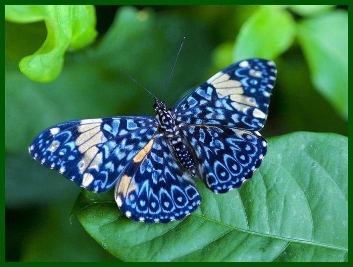 Фотографии тропических бабочек   Насекомые, Бабочки, Жуки