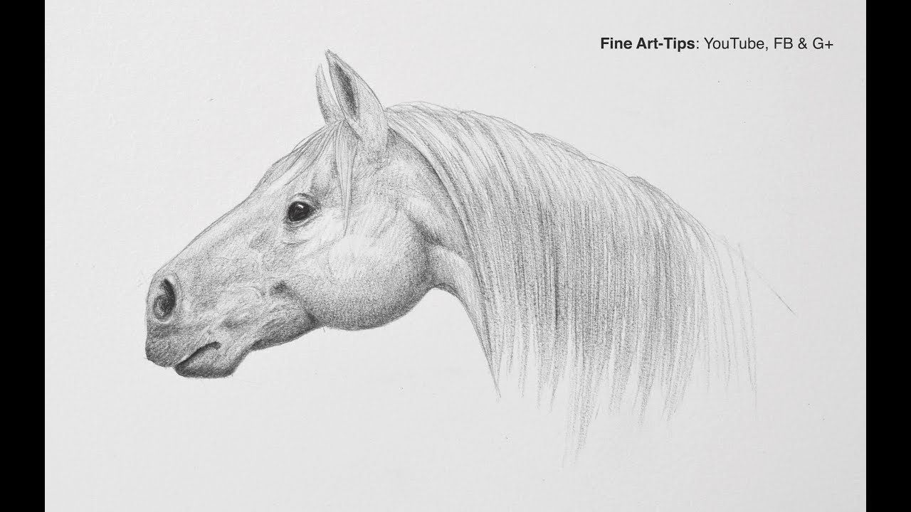 How To Draw A Horse Head Step By Step Easy Narrated Horse Head Drawing Horses Horse Head