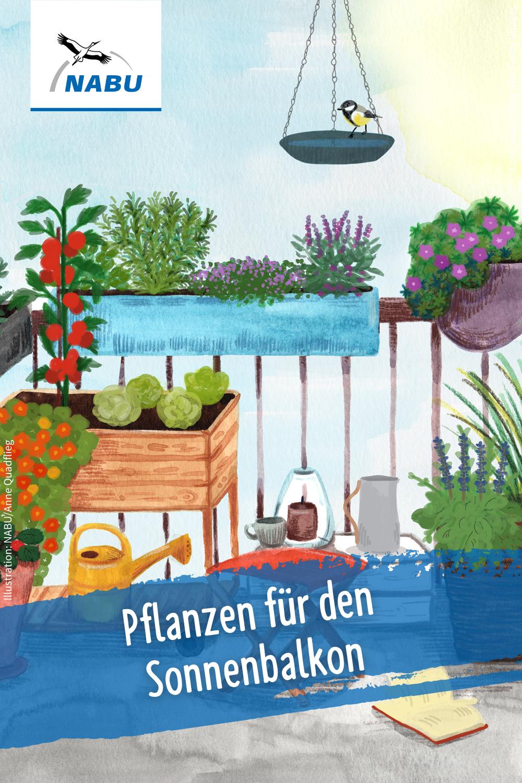 Für jeden Balkon die passenden Pflanzen   NABU in 8   Pflanzen ...