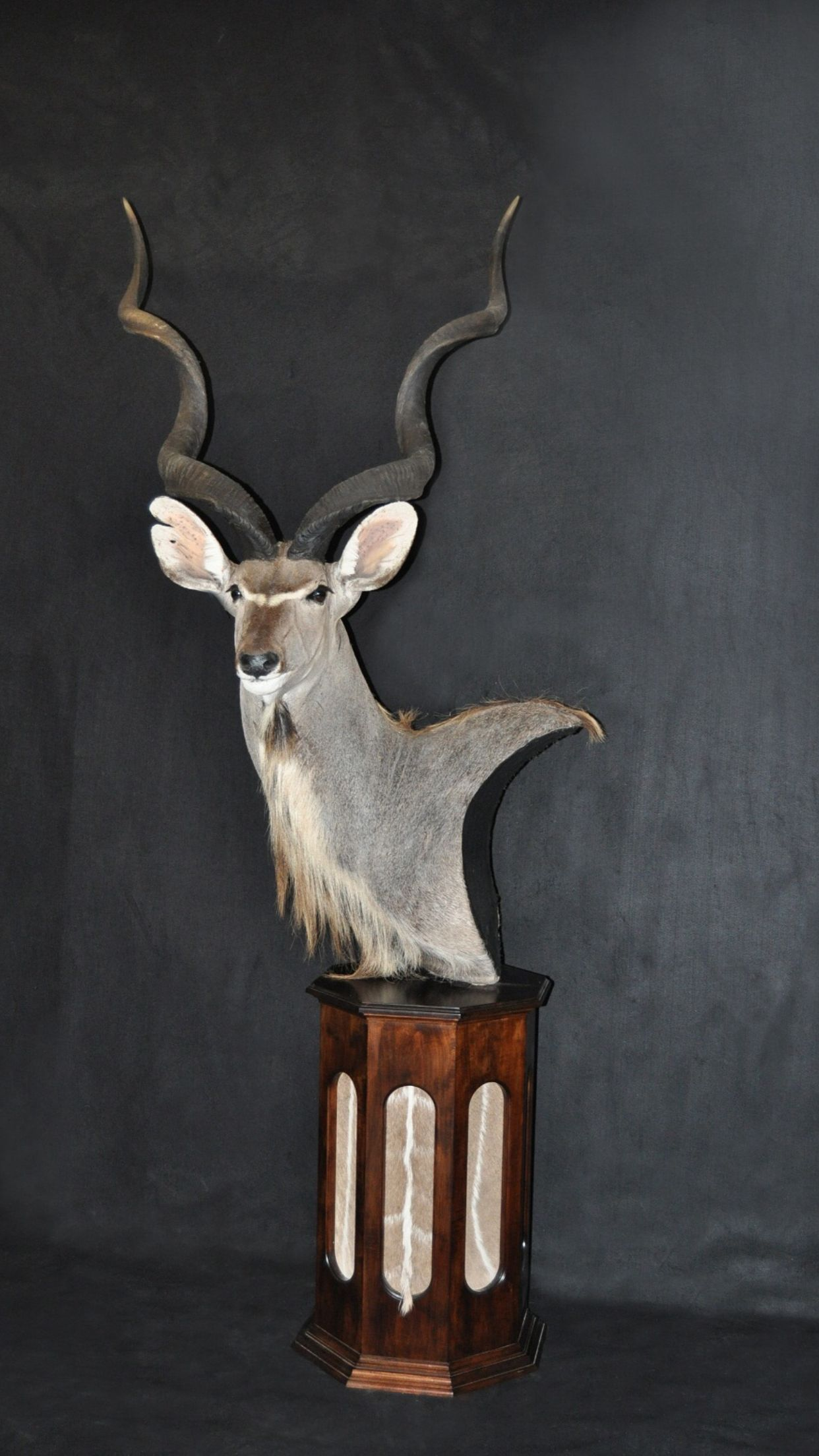 Kudu Pedestal Mount Taxidermy In 2019 Taxidermy