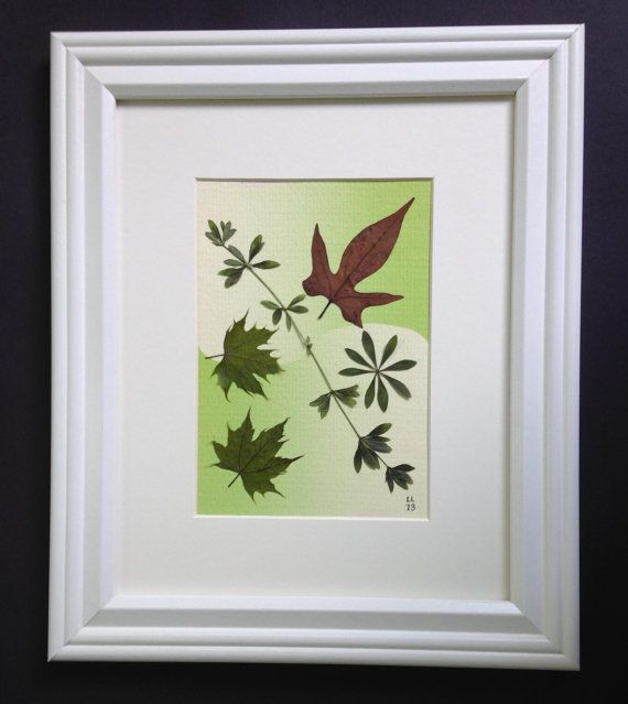 Framed Pressed Botanical  Art Young Maple, Sweet Potato & Sweet Woodruff by Lois Lawrence, $35.00