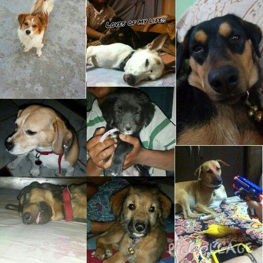 My assets Animals, Dogs, Tweety
